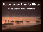 2 - Interagency Bison Management Plan