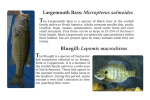 Largemouth Bass: Micropterus salmoides Bluegill: Lepomis