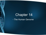 Ch 14 Notes - The Human Genome