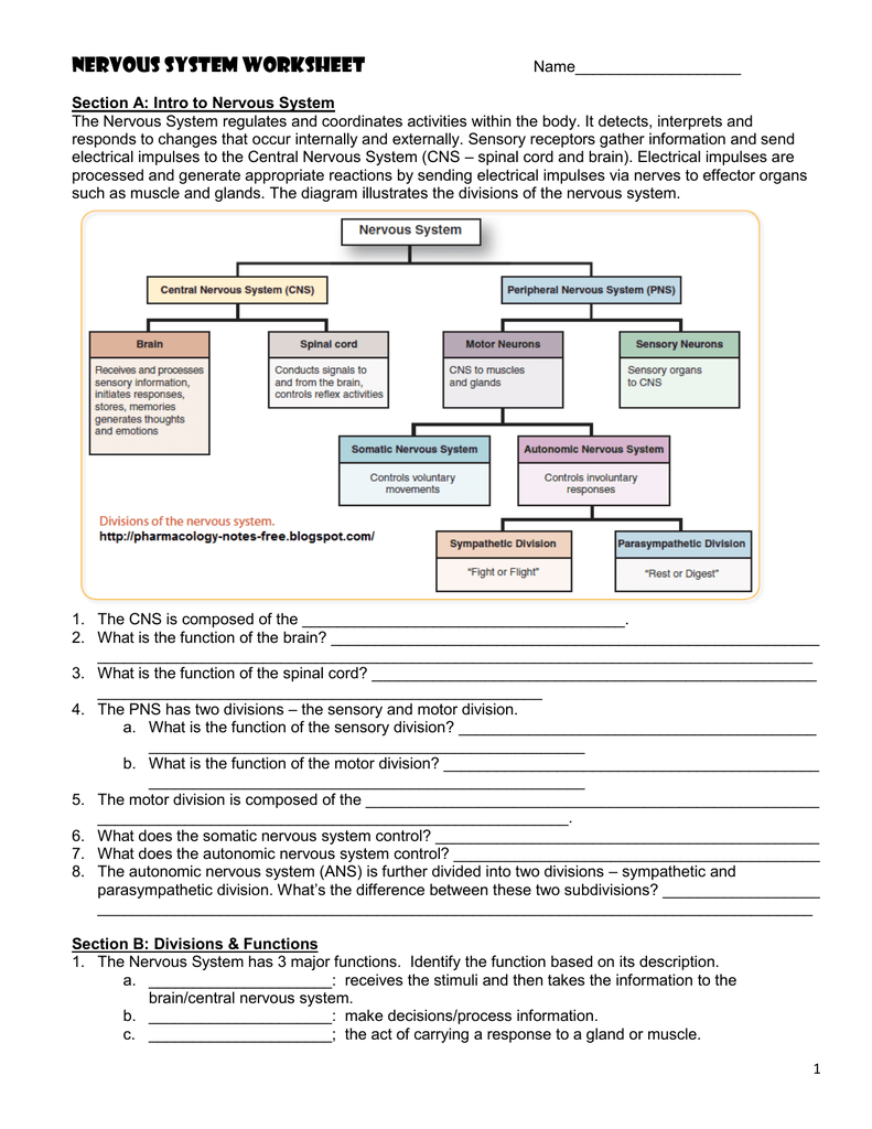 Nervous System Worksheet - Jackson County Faculty Sites!