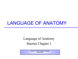 anatomy intro language of anatomy (4)