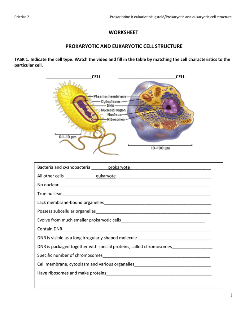 Worksheet Prokaryotic And Eukaryotic Cell Structure