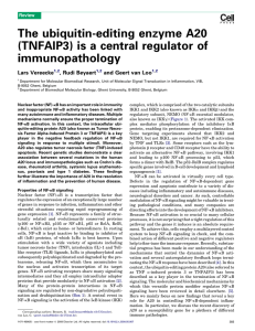The ubiquitin-editing enzyme A20 (TNFAIP3) is a central regulator of