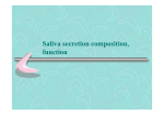 Saliva secretion composition, function