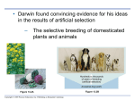 ppt on Evidence for Evolution