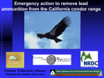 Emergency Action to Remove Lead Ammunition from the California