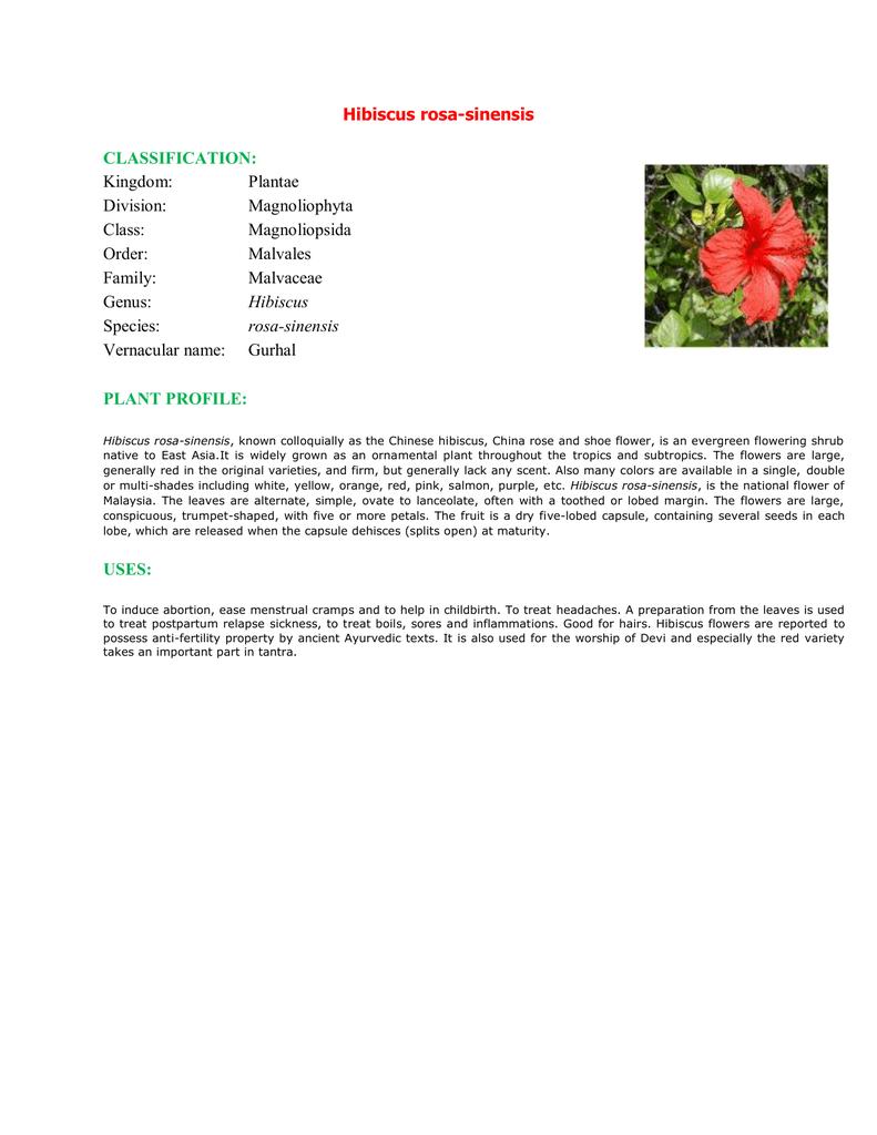 Hibiscus Rosa Sinensis Classification