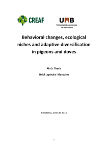 Behavioral changes, ecological niches and adaptive diversification