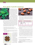 Bean plants: A growth experience
