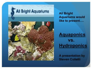 All Bright Aquariums would like to present….