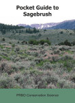 Pocket Guide to Sagebrush