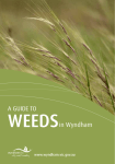 A GUIDE TO WEEDSin Wyndham