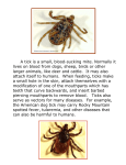 A tick is a small, blood-sucking mite. Normally it lives on blood from
