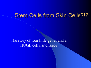Stem Cells from Skin Cells?!?
