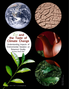 Tea and the Taste of Climate Change