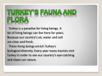 Turkey`s Flora and Fauna