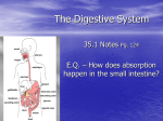 digestive,excretory systems
