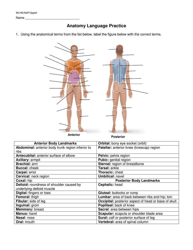 HANDOUT - Anatomy Language Practice