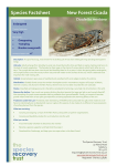 Species Factsheet New Forest Cicada Cicadetta montana