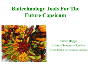 Biotechnology Tools For The Future Capsicum