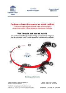On how a larva becomes an adult catfish Van larvale tot adulte katvis