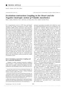 Excitation-contraction Coupling in the Heart and the Negative