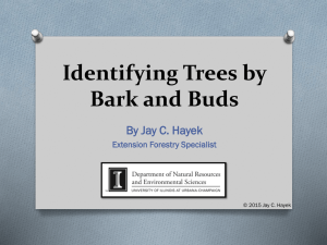Identifying Trees by Bark and Buds - Iowa State University Extension