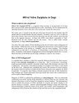 Mitral Valve Dysplasia in Dogs - Veterinary Specialty Services