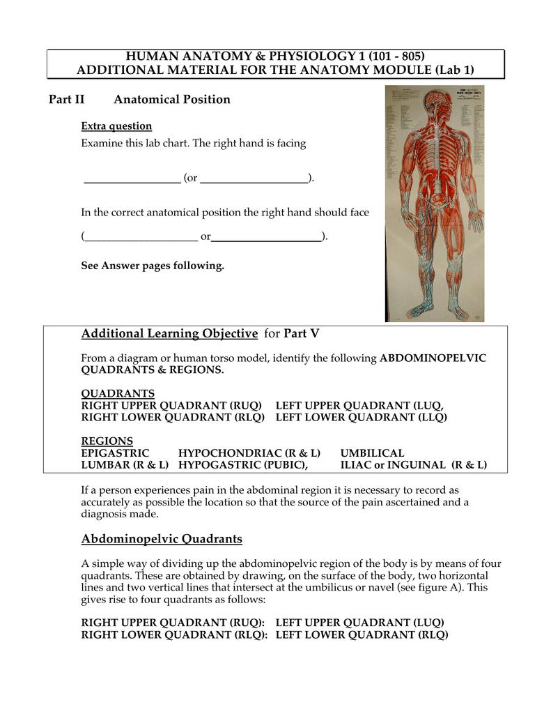Anatomy Module Extras