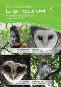 Large Forest Owl - Lake Macquarie City Council