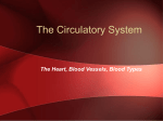 Humans have a closed circulatory system, typical