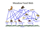 Meadow Food Web, Ecology pp
