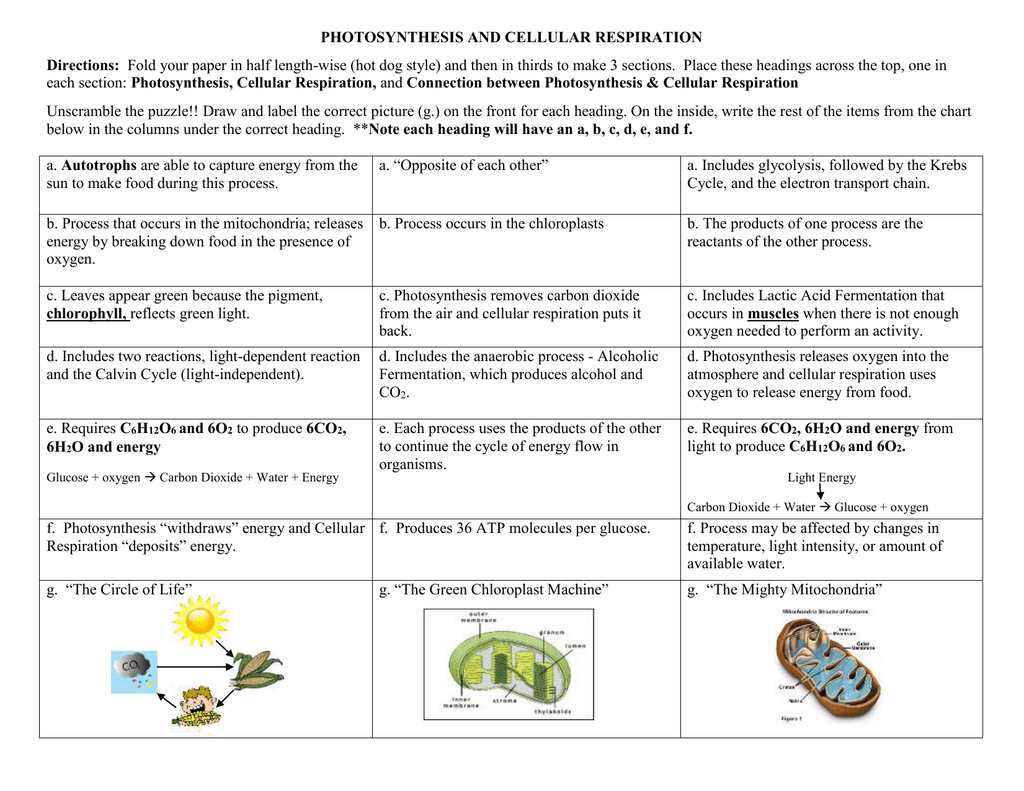 Concept Map Photosynthesis and Cellular Respiration – Photosynthesis Cellular Respiration Worksheet