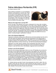 Feline Infectious Peritonitis (FIP)