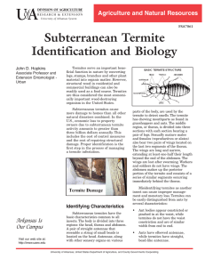 Subterranean Termite Identification and Biology