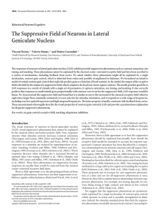 The Suppressive Field of Neurons in Lateral Geniculate Nucleus