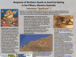 Response of Northern Quolls to Feral Cat Baiting in the Pilbara