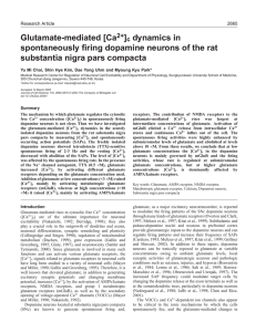 [Ca2+]c dynamics in spontaneously firing dopamine neurons of the