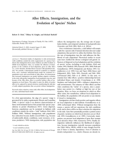 Allee Effects, Immigration, and the Evolution of Species` Niches