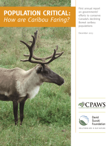 POPULATION CRITICAL: How are Caribou Faring?