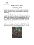 Phytophthora Root Rot of Soybean