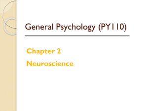Griggs Chapter 2: Neuroscience