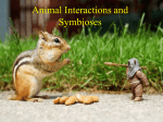 Animal Symbioses and Interactions