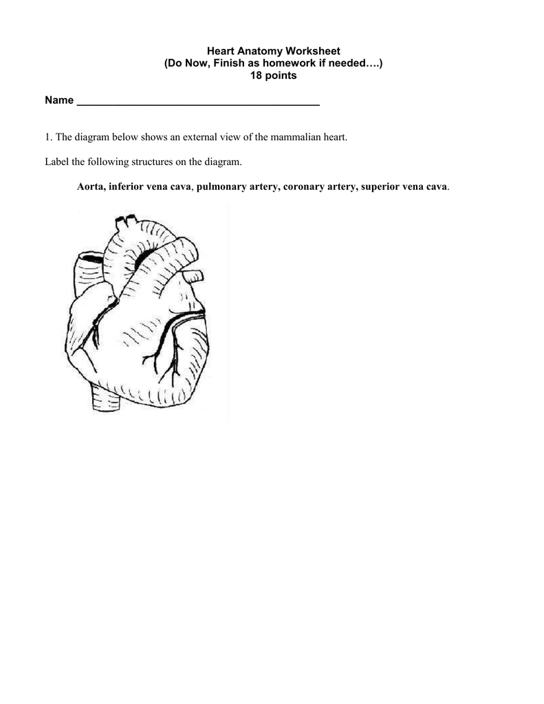 Mammalian Heart Anatomy Worksheet Internal Gallery - free printable ...