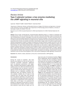 Review Article Type 3 adenylyl cyclase: a key enzyme mediating the