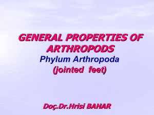 GENERAL PROPERTIES OF ARTHROPODS Phylum Arthropoda