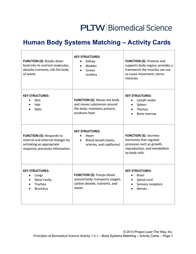 1 3 1 a sr human body systems matching pieces