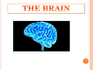 the brain - WordPress.com