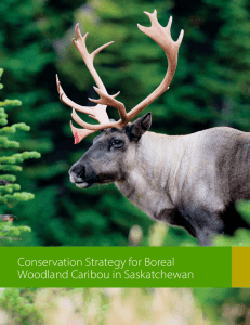 Woodland Caribou Conservation Strategy.cdr