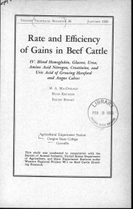 of Gains in Beef Cattle